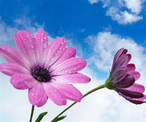 Newgraphyflowerswallpaperhddesktopnewgraphyflowers