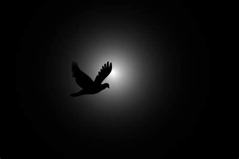 Fly, Bird, Flying, Sky, Dark, Sun