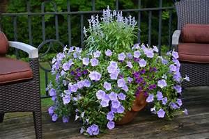 Balkonpflanzen Sonnig Pflegeleicht : winterharte balkonpflanzen pflanzarten und pflege tipps ~ Frokenaadalensverden.com Haus und Dekorationen