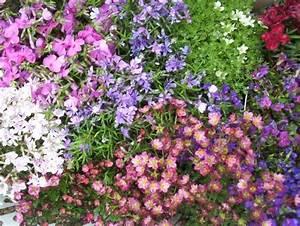 rocaille With tapis chambre bébé avec plante vivace a fleur