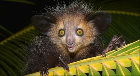 Ugly Animals A List of 10 Ugliest Animals In The World