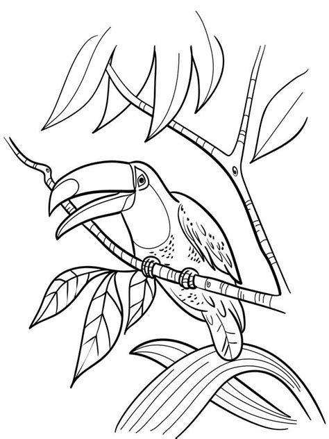 toucan coloring pages    print