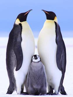 wildlife tourism antarctica