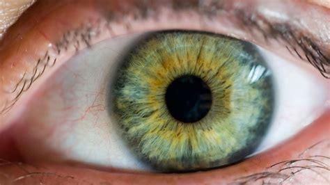 gut microbes linked  eye disease science aaas