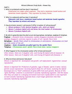 Mitosis  U0026 Meiosis Study Guide  U2013 Answer Key Part 1  1  What