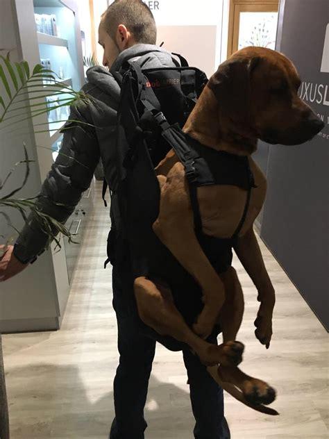 xxl hunderucksack zum tragen von hunden bis  kg gewicht