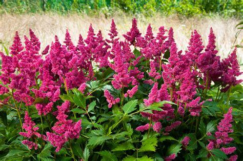 plante d hiver exterieur plante exterieur resistant au froid pivoine etc