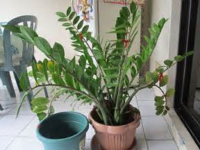 what s your favorite plant to grow indoors gardening forums