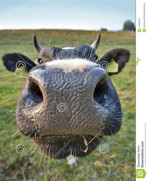 big nose  stock photo image