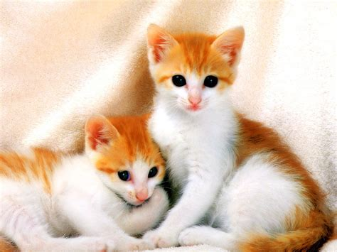 sor ktt sghyr baby cats   picture