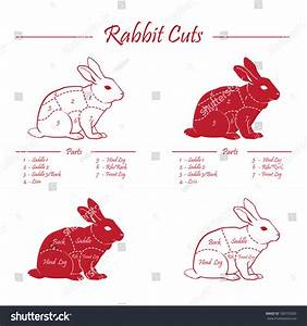Rabbit Set Of Meat Cuts Diagram - Red On White