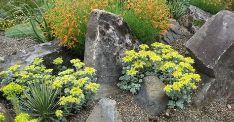 plants portland oregon sedum spathulifolium cape blanco growing among rocks and other drought tolerant plants in a