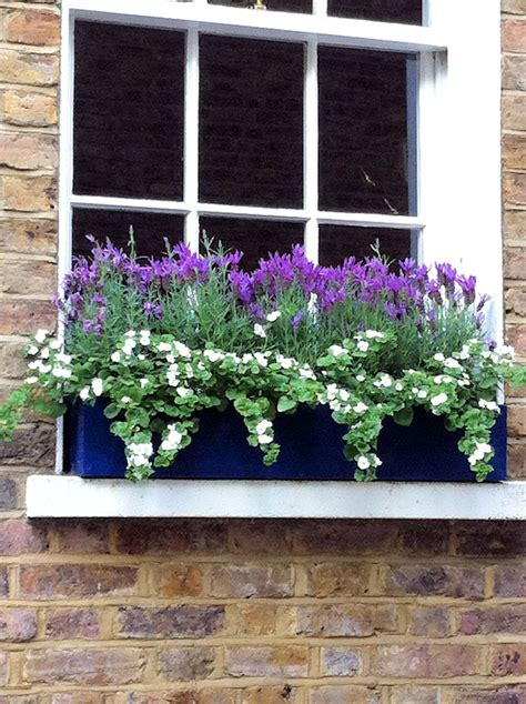 Window Sill Box Plants by Pretty Plant Combination In This Window Box