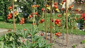 Tomaten Krankheiten Bilder : tomatenkrankheiten freude am garten ~ Frokenaadalensverden.com Haus und Dekorationen