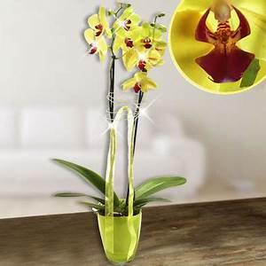Künstliche Orchideen Im Topf : der online orchideen versand im internet orchideen versenden ~ Watch28wear.com Haus und Dekorationen