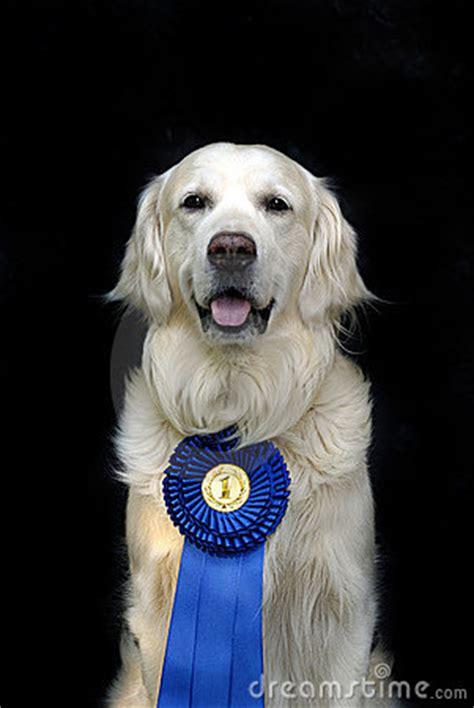 dog  medal stock image image