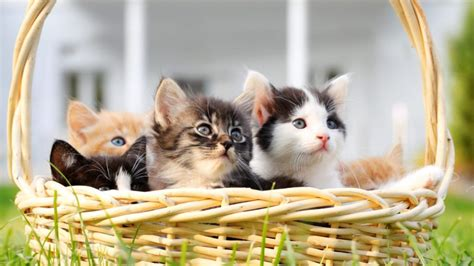 Cute Cloud Bing Wallpaper Download