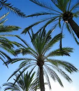 Bilder Von Palmen : herzlich willkommen auf mallorca we love mallorca ~ Frokenaadalensverden.com Haus und Dekorationen