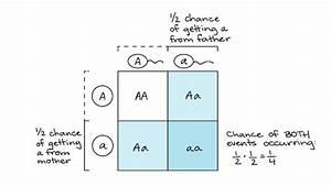 Probabilities In Genetics  Article