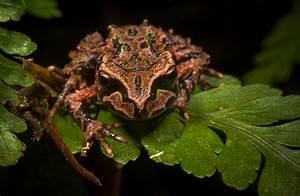 Archey U0026 39 S Frog