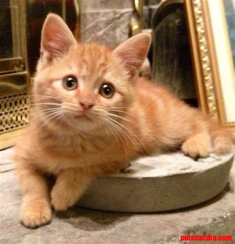 Clueless About Cats Need Some Help  Cute Cats Hq Free