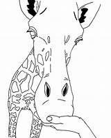 Giraffe Coloring Pages Face Cute Head Outline Animals Printable Animal Giraffes Line Drawing Giraff Drawings Clipart Cliparts Clip Camels Library sketch template