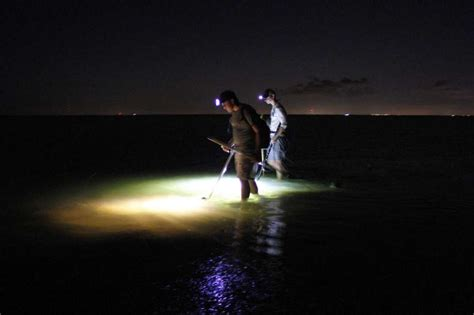 flounder gigging lights nighttime flounder gigging houston chronicle