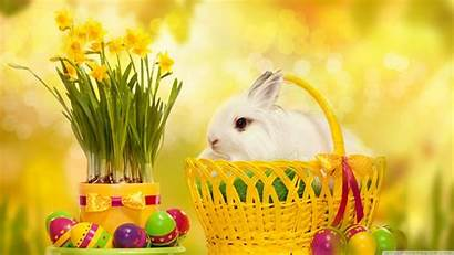 Easter Bunny Happy Wallpapers