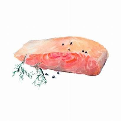 Salmon Watercolor Illustrations Av Fillet Isoleras Bakgrund