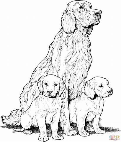 Labrador Coloring Pages Puppies Printable Retriever Golden