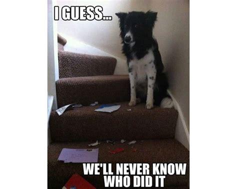funniest   destructive dogs   world