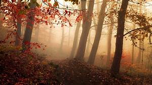 Nature, Landscape, Path, Mist, Sunrise, Sunlight, Forest, Fall, Leaves, Trees, Atmosphere, Red, Wallpaper
