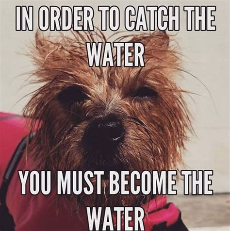14 Funny Yorkie Memes That Will Make You Laugh! in 2020 ...