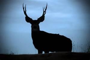 Mule Head Silhouette | www.imgkid.com - The Image Kid Has It!