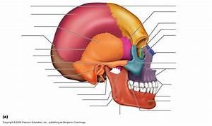 Skeleton Diagrams