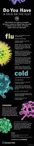 Is It A Cold Or The Flu  Know Your F A C T S   Infographic