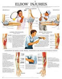 Elbow injuries 5045 Elbow Injuries and Disorders