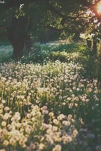 paisaje flores | Tumblr