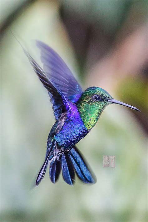 25+ Best Ideas About Hummingbirds On Pinterest