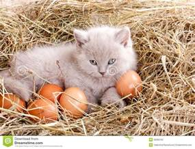 cat egg cat in nest with eggs stock photo image 39395162