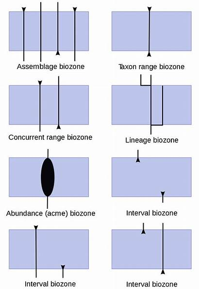 Biozone Types Biozones Wikipedia