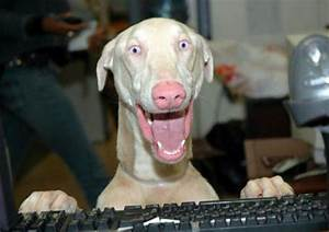 Happy dog - Funny pictures of animals