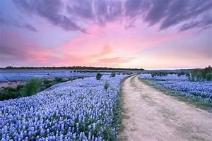 A Bluebonnet Field Under Evening Sky Texas Image