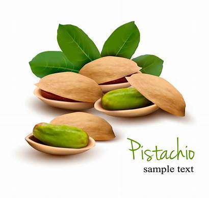 Vector Pistachio Realistic Material Leaves Background Shiny