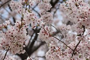 Fun & Free Daegu Travel: March 2016