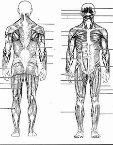 Free Blank Body  Download Free Clip Art  Free Clip Art On Clipart Library