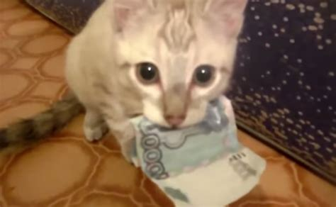 funny kitten refuses  return money meow gifs