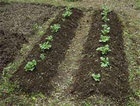 Types Of Soil For Container Gardening  Green Patches