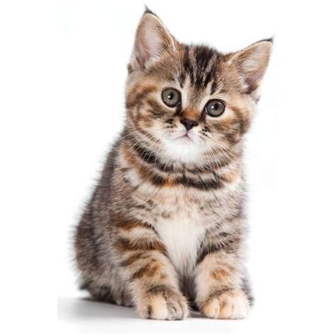miroir chambre bébé autocollant sticker voiture bebe chaton achat