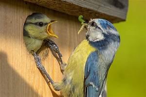 Nistkasten Für Blaumeisen : bauanleitungen f r vogel nistk sten nabu ~ Orissabook.com Haus und Dekorationen